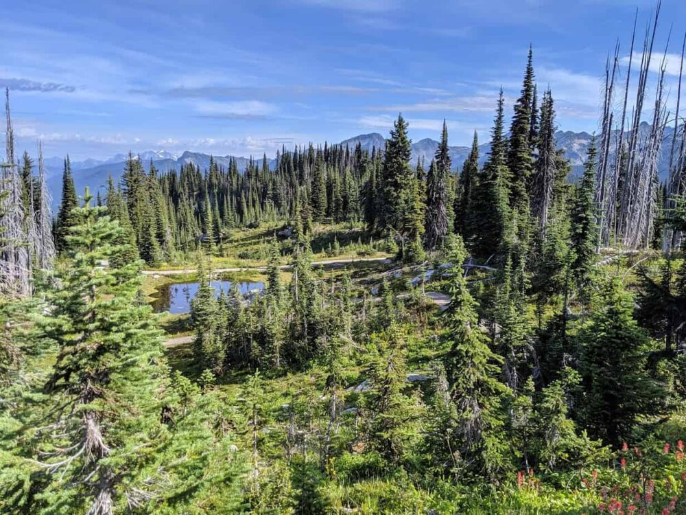 Meadows, trees and faraway mountains at the top of the Meadows in the Sky Parkway in Mount Revelstoke National Park