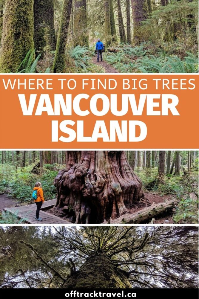 Vancouver Island is famed for its lush, mossy rainforests filled with huge trees. Click to discover 15 different places to connect with Vancouver Island's magnificent trees.