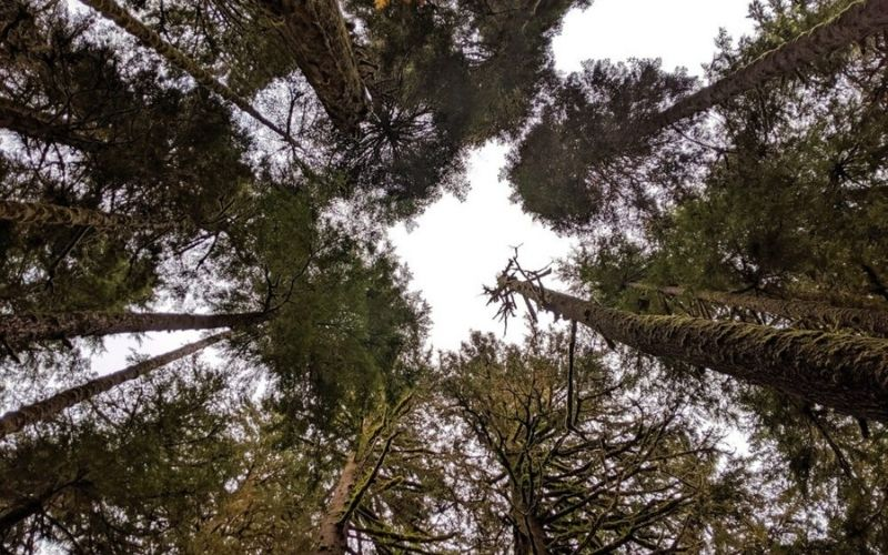 Where to Find Big Trees on Vancouver Island, British Columbia