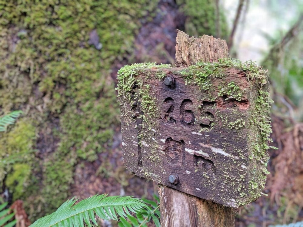 A mossy wooden sign with tree height carved into it - 265 feet and 81m