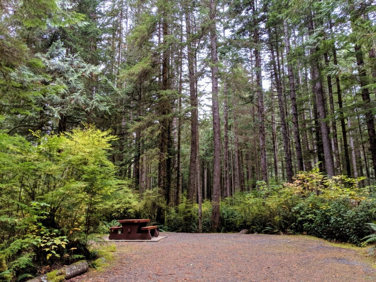 View of China Beach campsite with picnic table and tall trees
