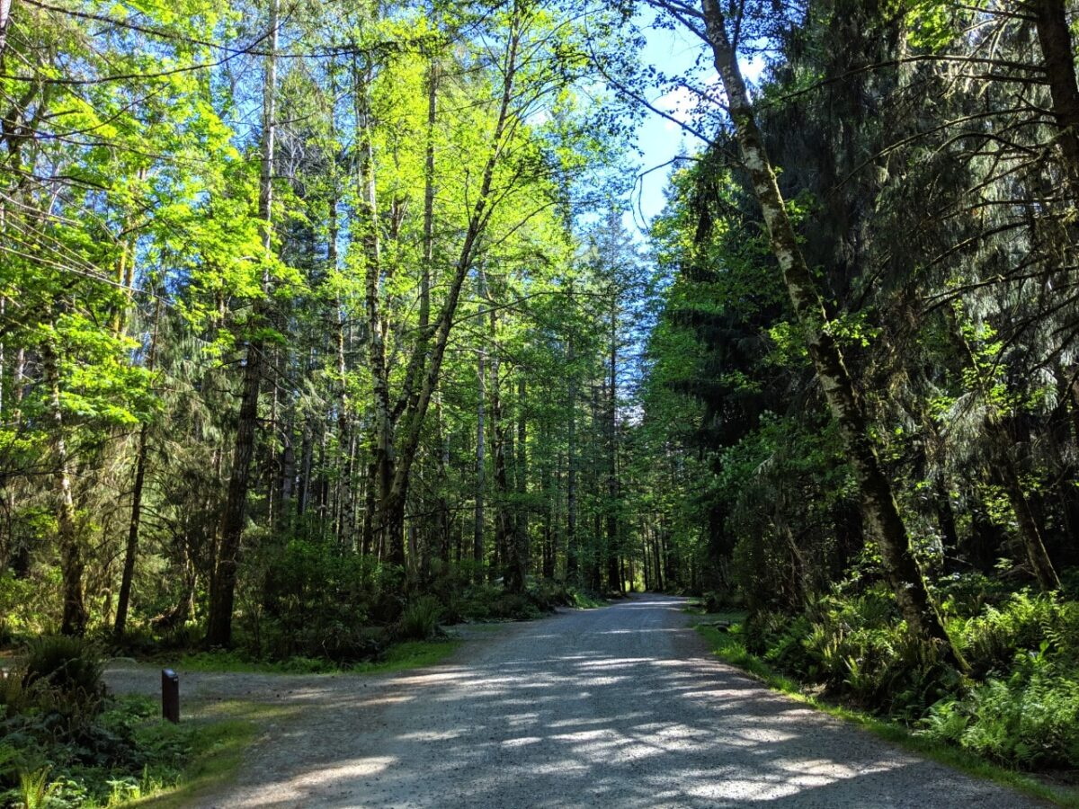A light dappled section of the Quinsam Campground road, lined by trees
