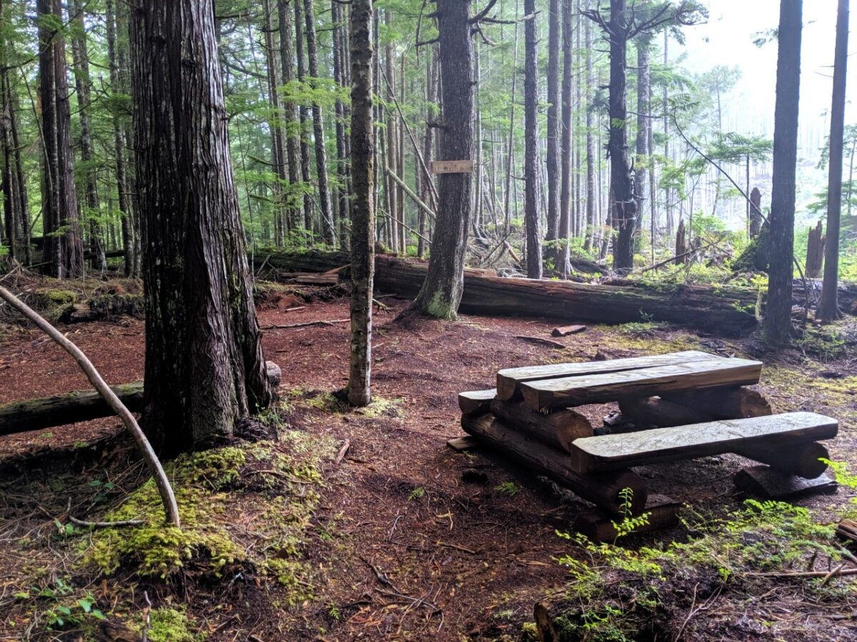 Picnic bench with flat area in forest - one of the camping areas on the Sunshine Coast Trail