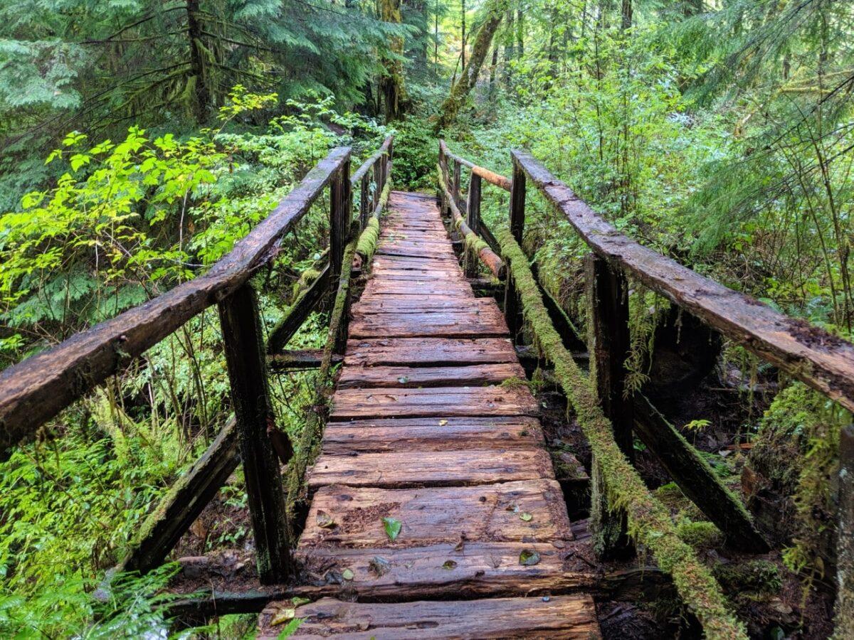 Mossy bridge on the Sunshine Coast Trail