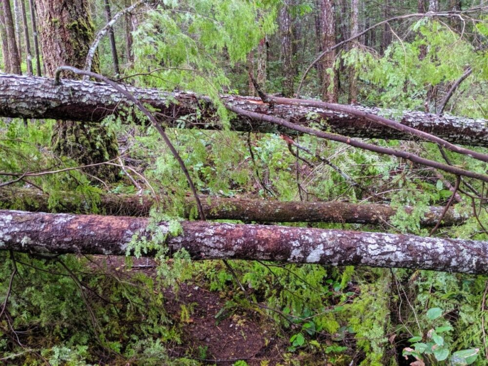 Three downed trees on hiking trail during shoulder season