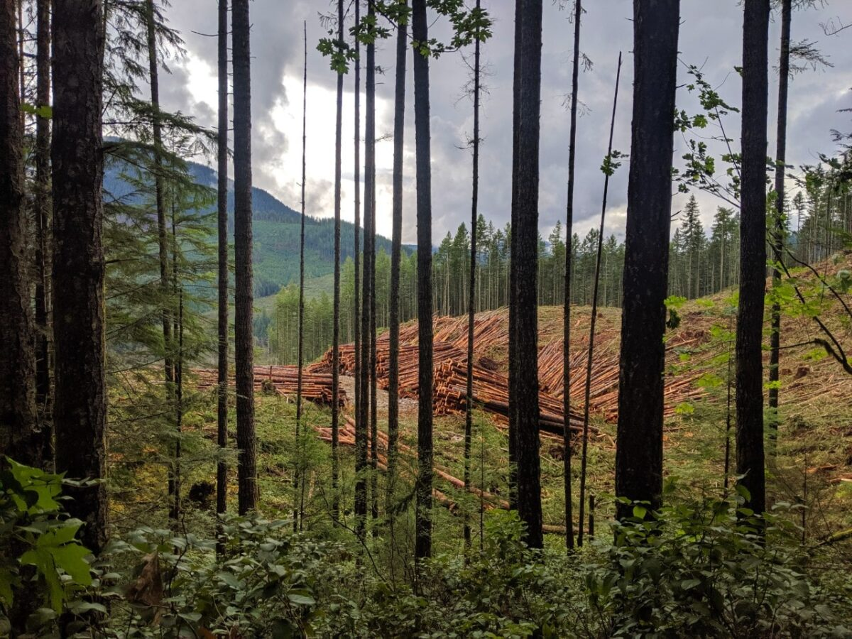 Logs sorted into piles as part of logging operation, as seen through the trees from the Sunshine Coast Trail