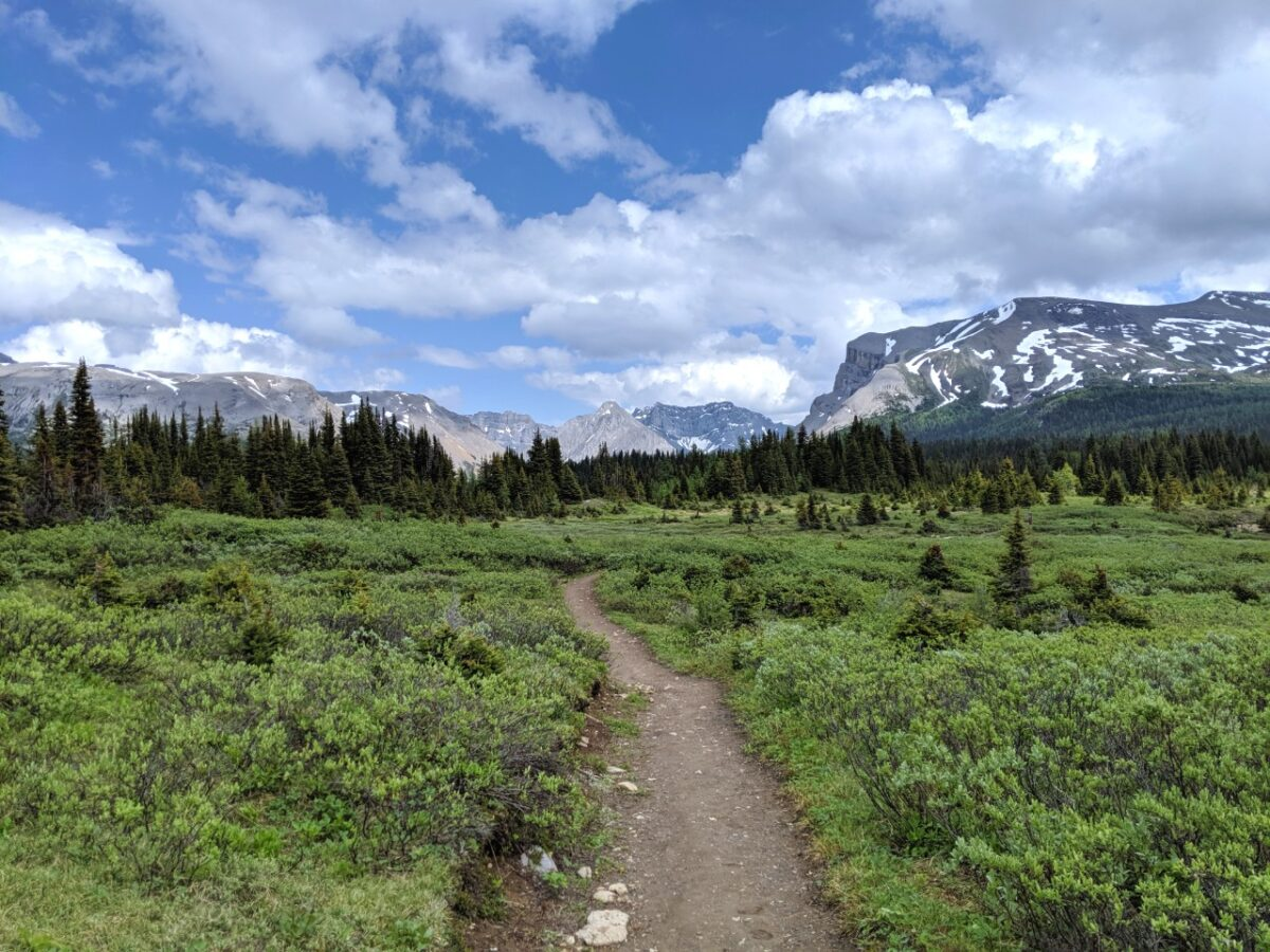 Dirt hiking trail leading through alpine meadows, Mount Assiniboine Provincial Park