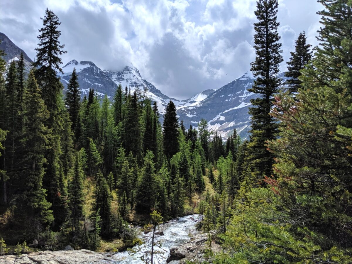 River rushing in forest with mountain backdrop in Mount Assiniboine Provincial Park