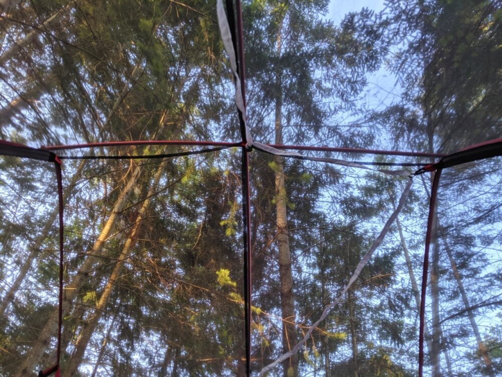 Looking up to trees through see-through tent structure