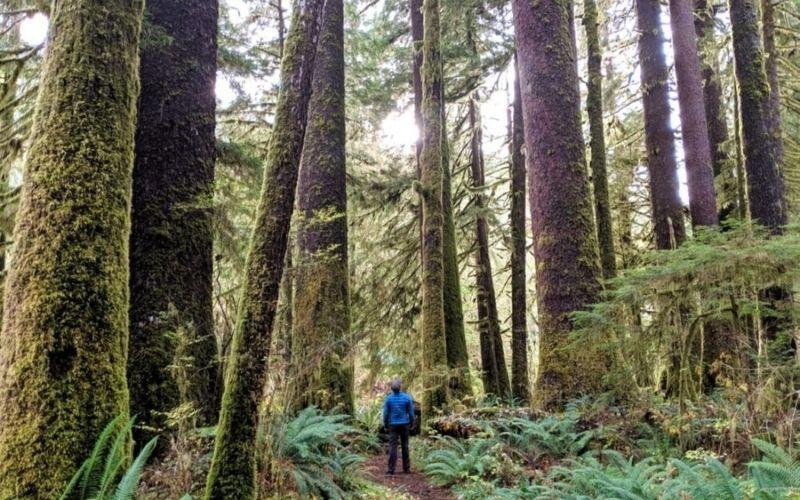 Exploring Majestic Carmanah Walbran Provincial Park, British Columbia