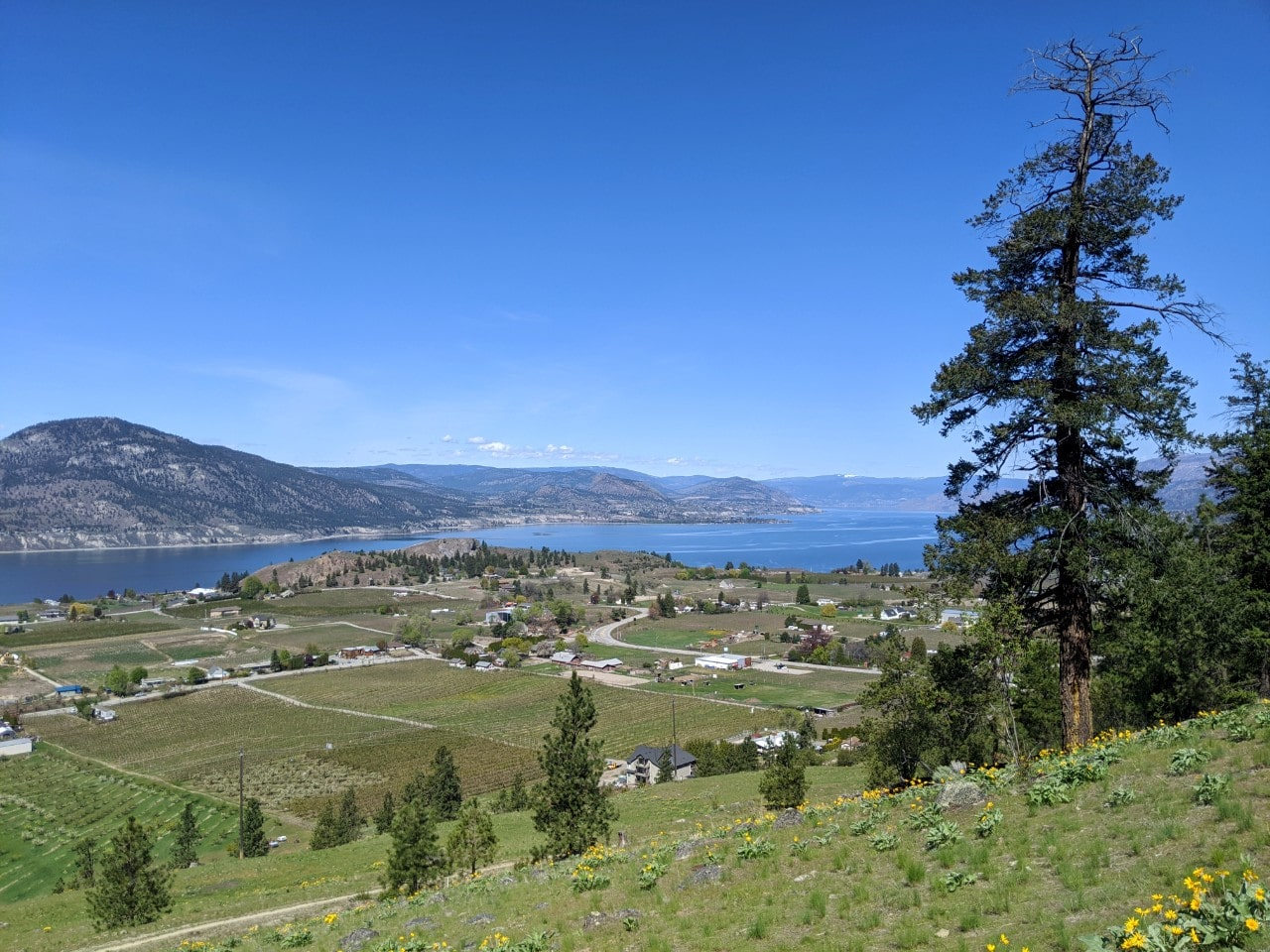 Elevated view from hiking trail looking down on Penticton's Upper Bench and deep blue Okanagan Lake