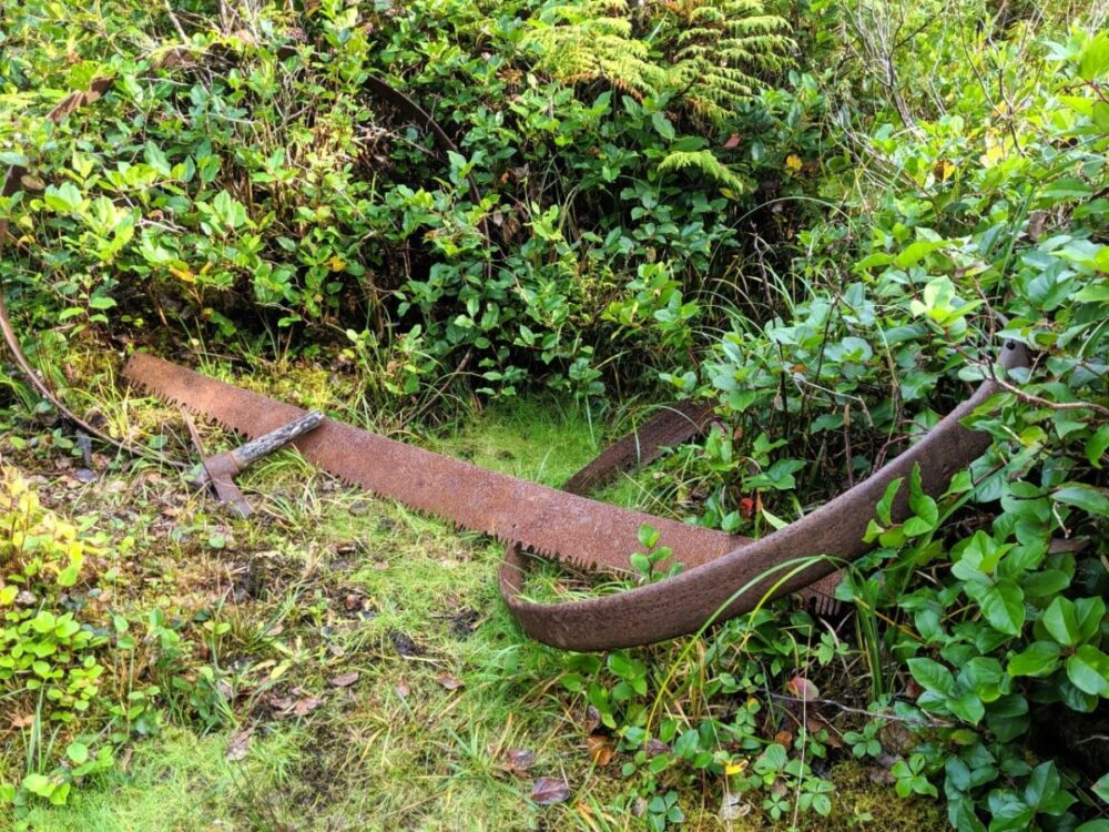 Rusted saw and other tools left in vegetation next to hiking trail