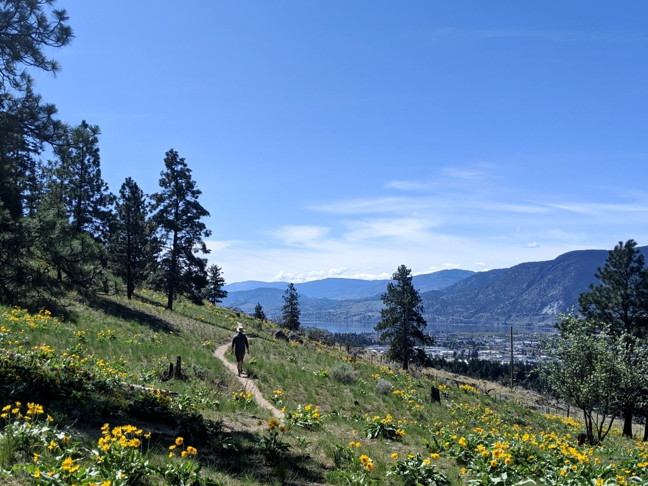JR walking on narrow hiking trail lined with yellow wildflowers with lake and town views in background