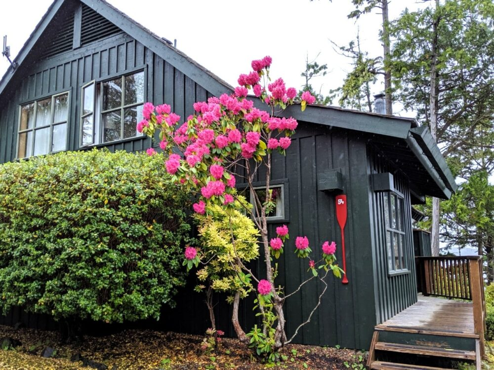 Wooden two floor cabin with pink flowers blooming outside at Middle Beach Lodge, one of the best places to stay in Tofino