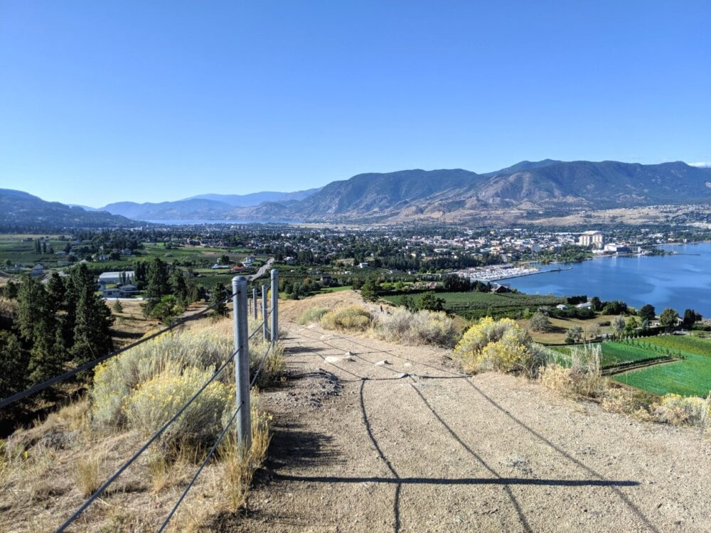 View of trail leading downwards with penticton city views behind, lined with vineyards