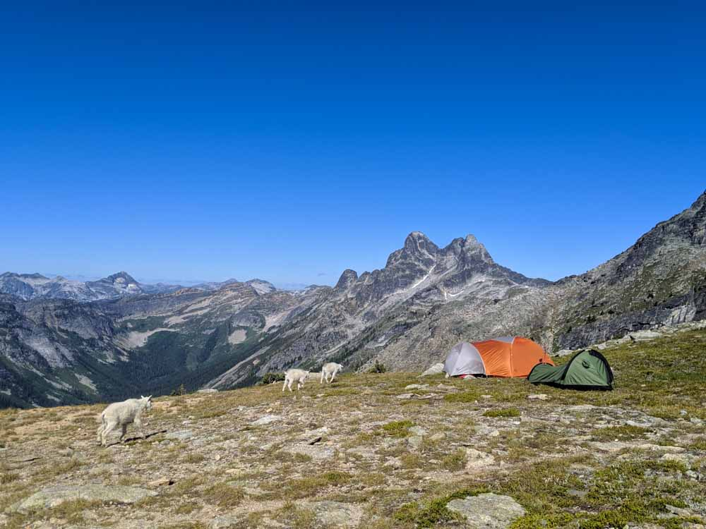 Two tents are set up on Gimli Ridge, with spectacular views behind and three mountain goats approaching