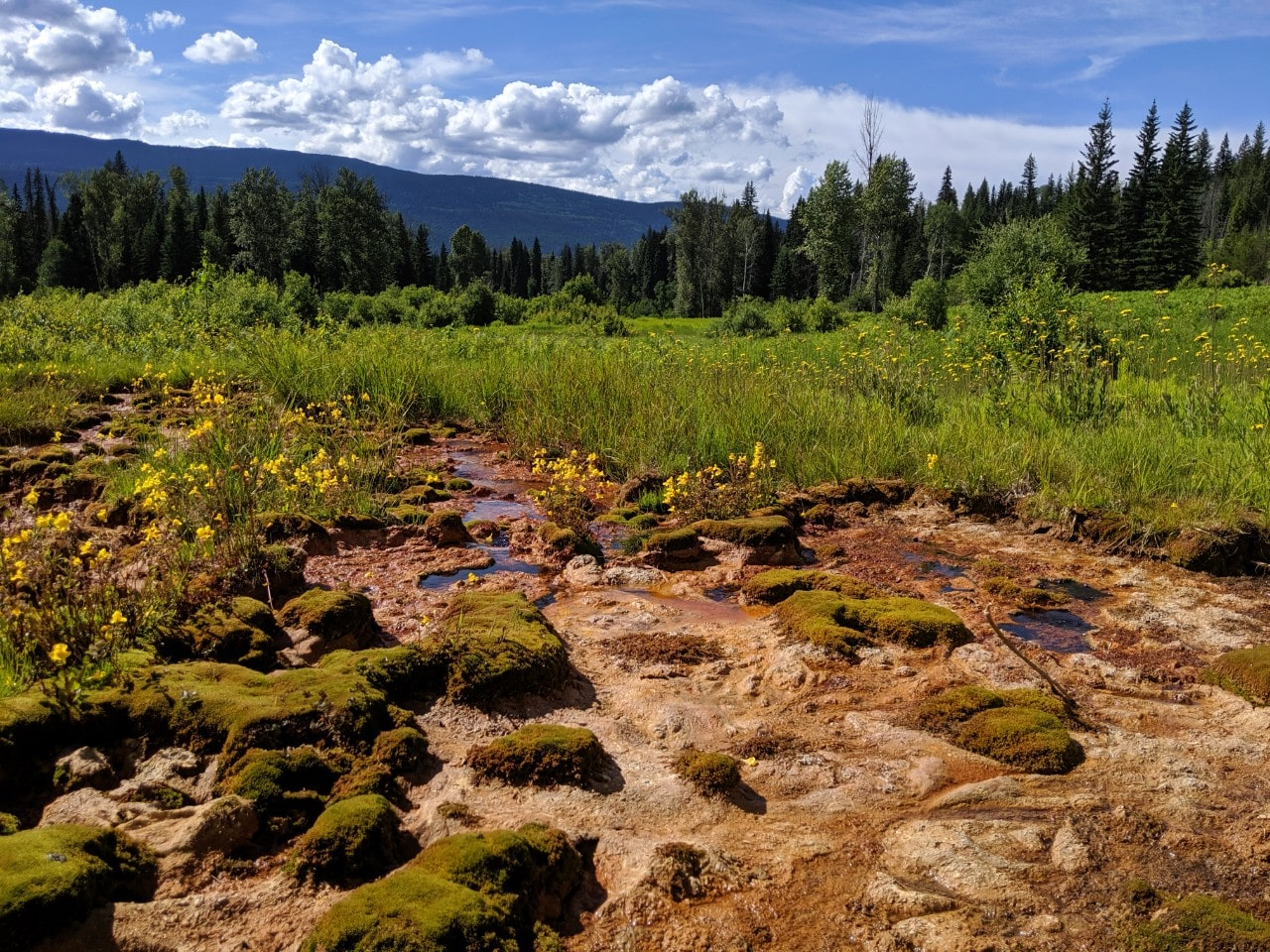 Mineral spring pools with clay ground and wildflowers in Wells Gray Provincial Park