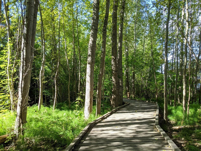 Boardwalk leading into forest on BX Creek Delta Trail