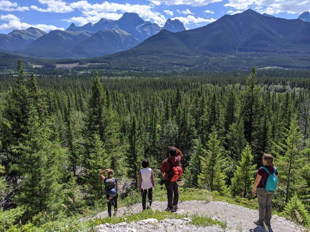 Four hikers stand on hiking trail looking out a views of forest and mountain peaks on the way to Rat's Nest Cave