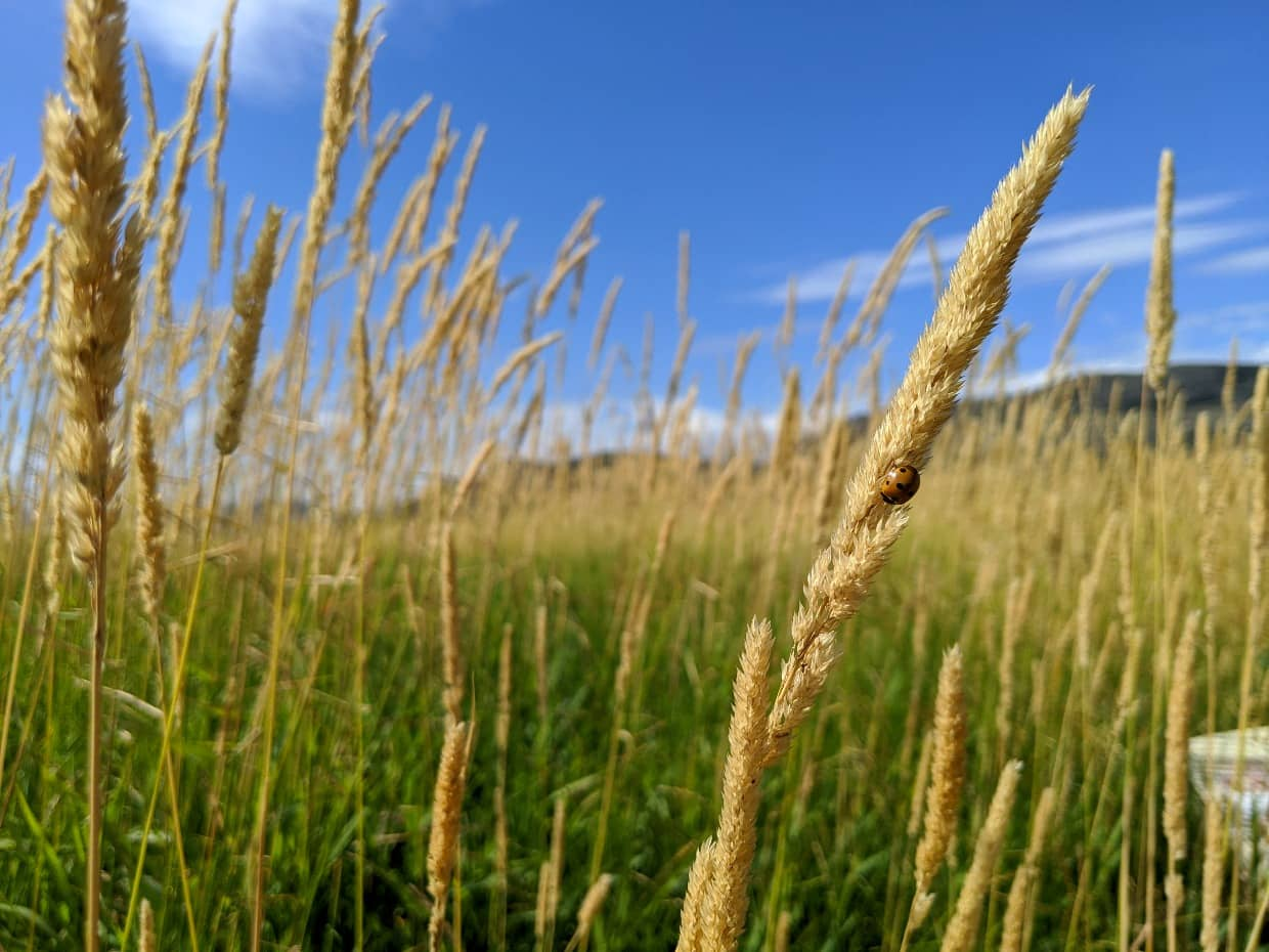 Close up of grass with ladybird at Swan Lake Nature Reserve, one of the best places to visit in Vernon