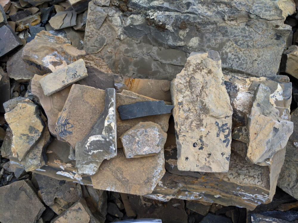 Pile of shale slabs at Walcott Quarry, all with fossils within the rock