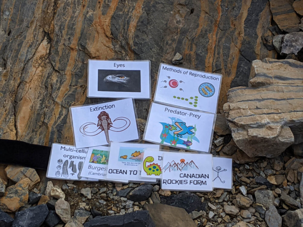 Flashcards and evolution timeline on ground, featuring Extinction, Burgess Shale etc.