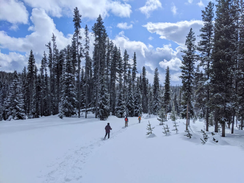 Three people using snowshoes walking along snowy trail and entering forest