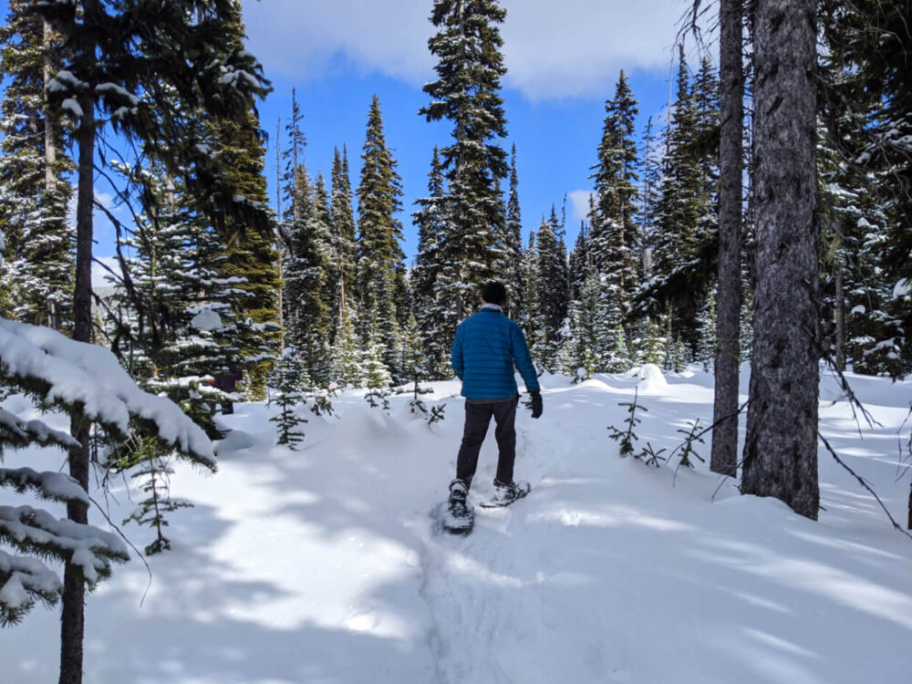JR snowshoeing through forest on trail, surrounded by trees