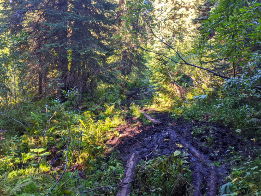 Hiking trail section with mud and foliage