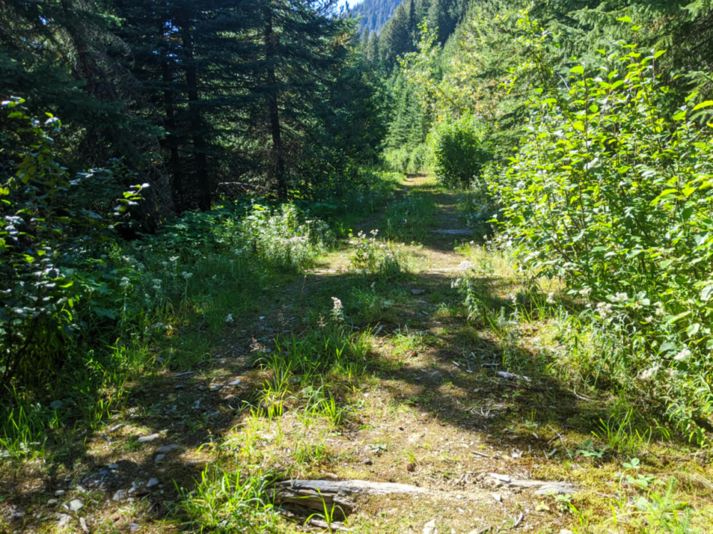 Wide and flat grassy path at the start of the Pinnacle Lake trail