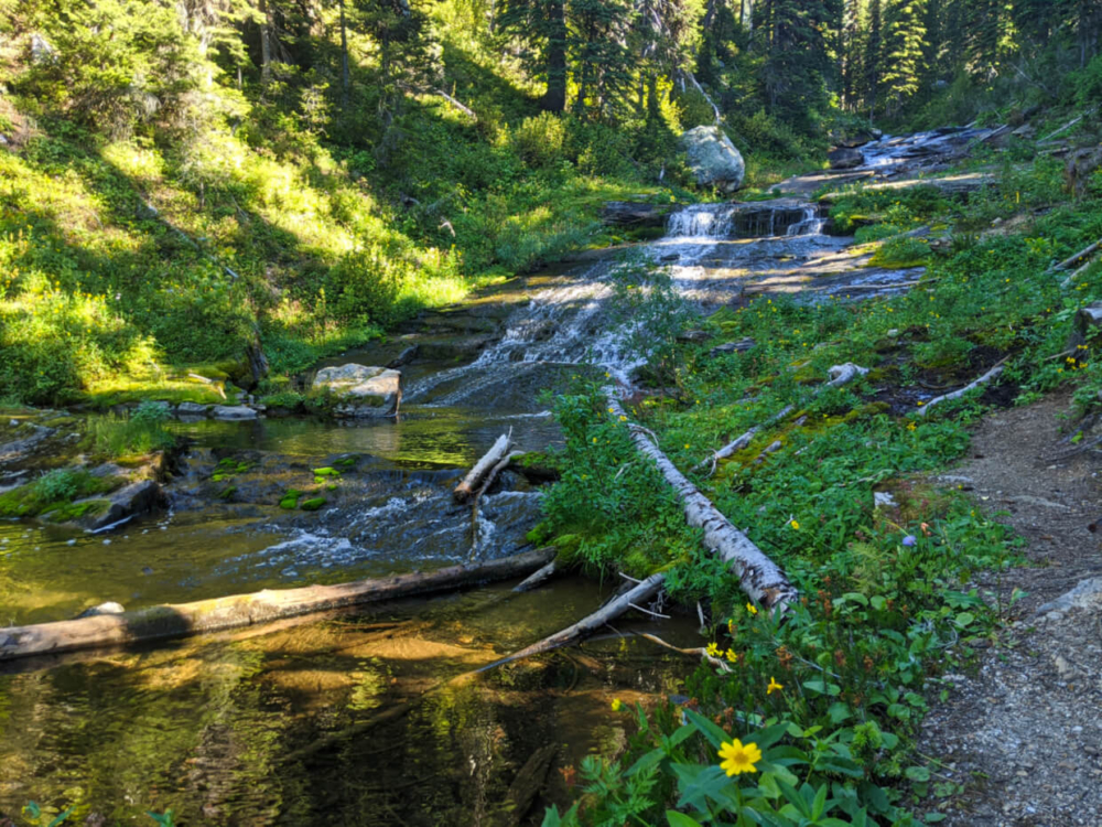 Cascading creek with mossy rocks and yellow wildflowers next to hiking trail