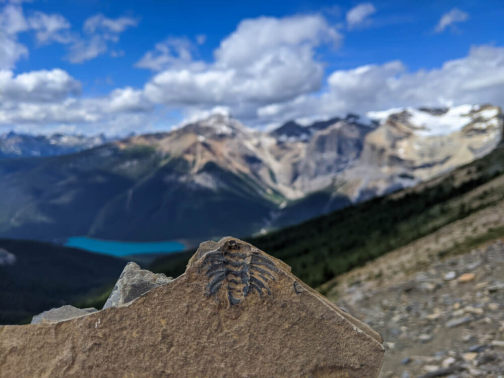 Close up of trilobite fossil within shale slab, being held up in front of mountainous view with turquoise lake at base