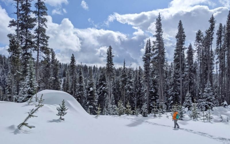 Snowshoeing 101: A Beginner's Guide