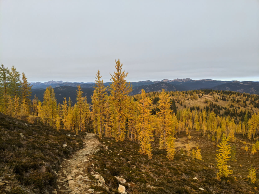 Rocky hiking path leading through golden larch forest