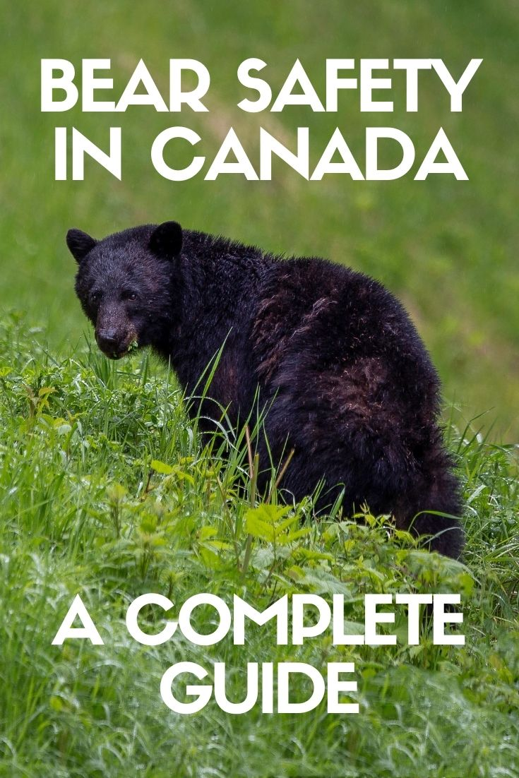 Canada's untamed natural beauty is (rightfully) world famous. And so are the majestic bears that call it home. Learning some basic bear safety is absolutely essential for anyone planning to explore beyond the city streets. Click here to discover everything you need to know!