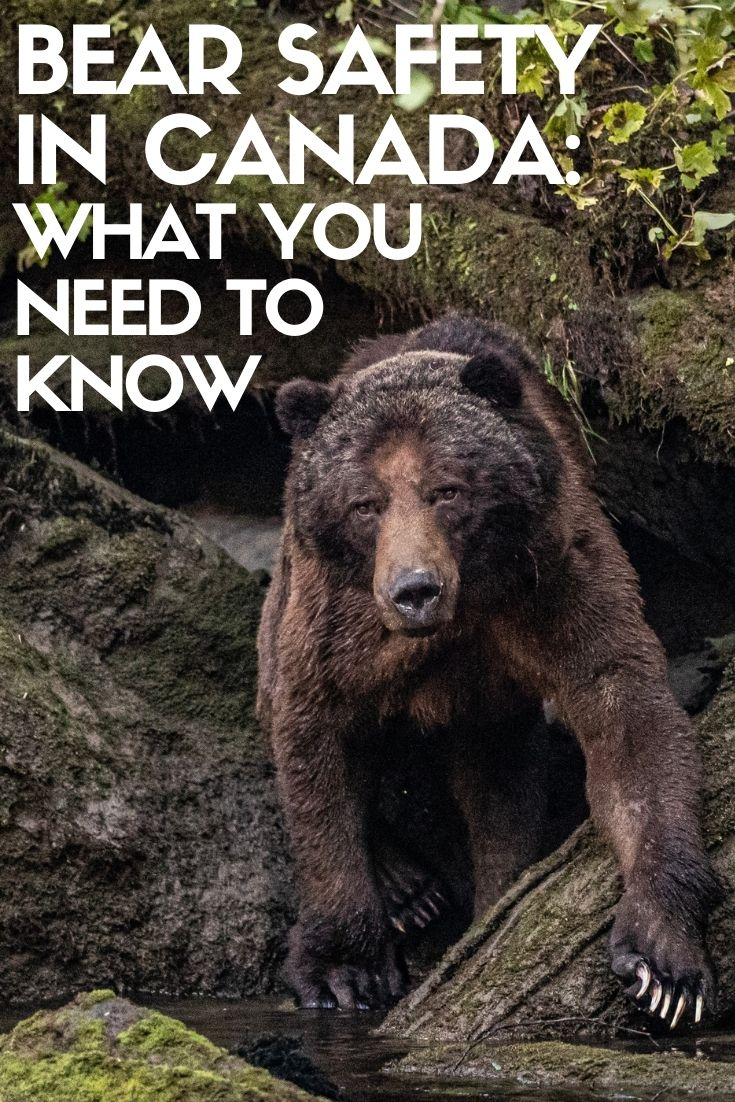 It's normal to be frightened of encountering a bear. But fear shouldn't stop you exploring the outdoors! This guide provides an introduction to bear safety in Canada. offtracktravel.ca