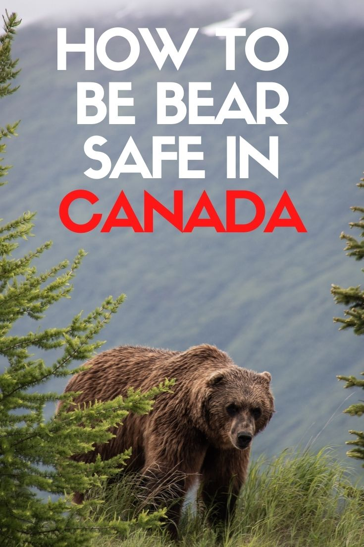 It's normal to be frightened of encountering a bear. The best way to reduce this fear is to learn. This guide will provide an introduction to bear safety for anyone wanting to explore Canada. offtracktravel.ca