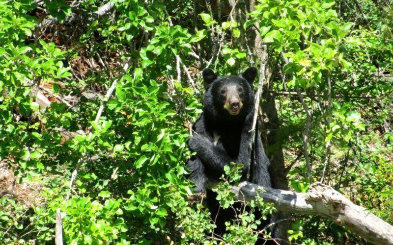 header bear safety