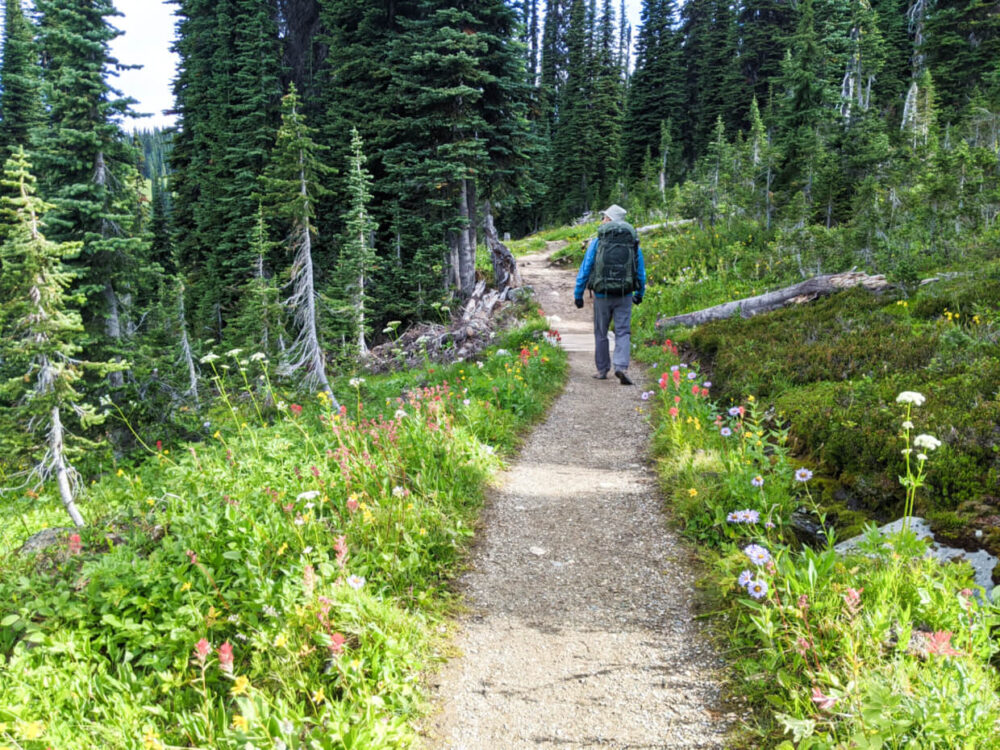 JR walking ahead on Eva Lake Trail with wildflowers and forest lining the trail