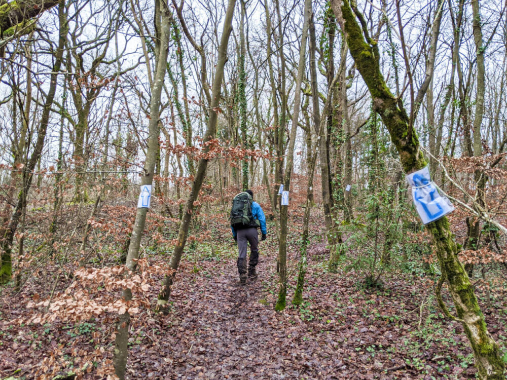 JR walking through forest with multiple blue arrow signs on bark of many trees
