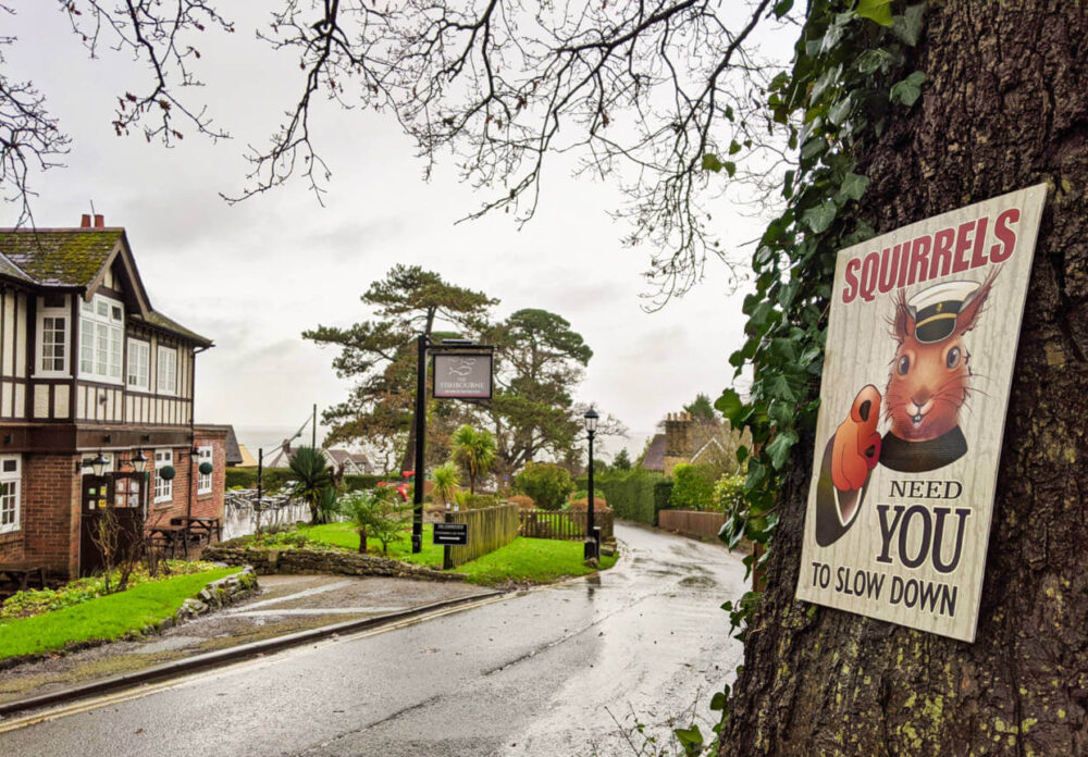 Squirrels Need you to slow down sign on tree next to white and black framed pub in Fishbourne, Isle of Wight