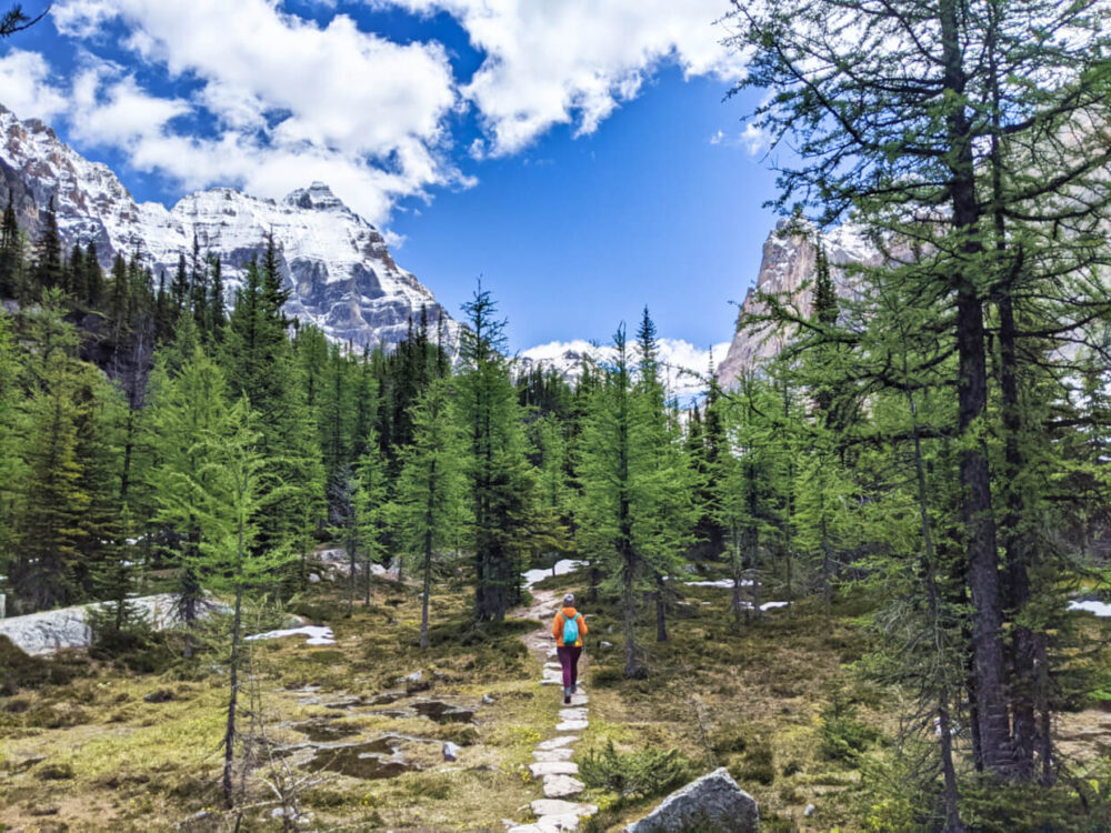 Gemma walking on hiking path through larch forest at Lake O'Hara