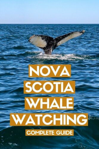 A complete guide to whale watching in Nova Scotia, Canada, including when and where to go and which whales you can hope to see. Click here to discover more! offtracktravel.ca