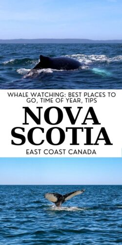 Being able to catch a glimpse of some of the world's largest mammals in their natural habitat is a truly special experience. Whale watching has to be the most exhilarating way to connect with nature and Nova Scotia is one of the best places to do it! Click here to discover everything you need to know about whale watching in Nova Scotia, Canada! offtracktravel.ca