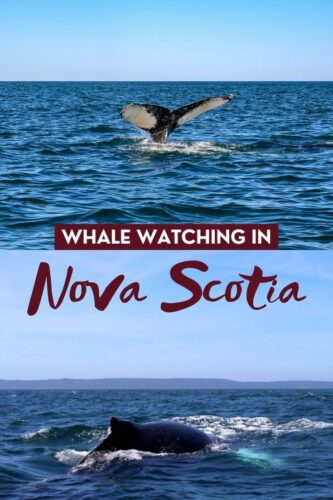Whale watching has to be the most exhilarating way to connect with nature and Nova Scotia is one of the best places to do it! Click here to discover everything you need to know about whale watching in Nova Scotia. offtracktravel.ca