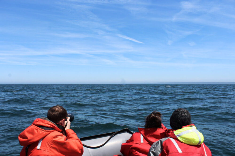 Brier Island Whale and Seabird Cruises Zodiac boat with passengers, looking out to whale on Bay of Fundy