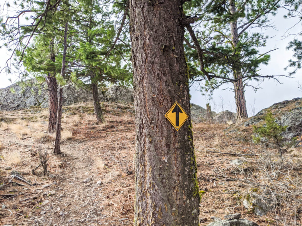 Yellow directional sign with arrow nailed onto tree, with dirt path in background