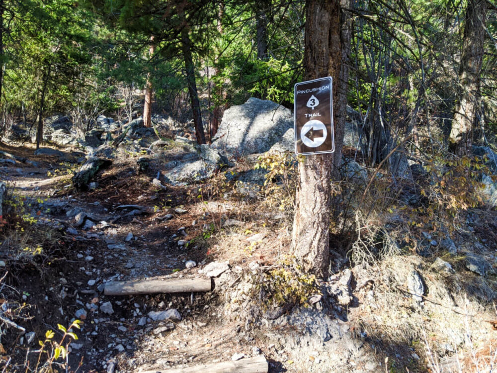 Brown Pincushion Trail enamel sign nailed onto tree, directing hikers back onto the gravel path to the left