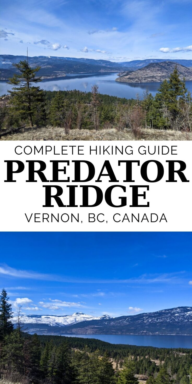 Easily accessed right from Highway 97, Predator Ridge is one of those classic 'hiding in plain sight' hiking destinations. Click here to discover why you should check out the hiking trails at Predator Ridge, near Vernon, British Columbia (Canada). offtracktravel.ca