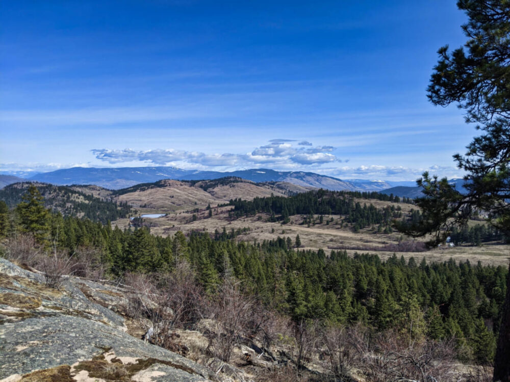 View from Predator Ridge hiking trail towards rugged and hilly grasslands, with forest in foreground